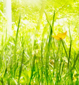 Bild zum Artikel Transponieren, grüne Grashalme