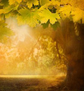 Klavierstück Herbstmorgen mit Übetipps